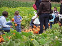 Fall School Field Trips at Parlee Farms!