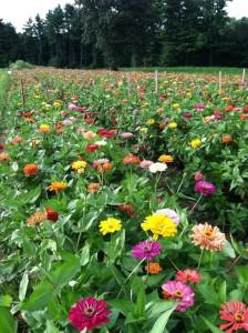 Parlee flowers