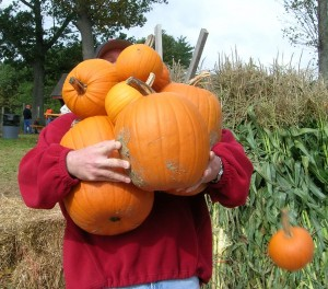 All You Can Carry Pumpkins at Parlee Farms