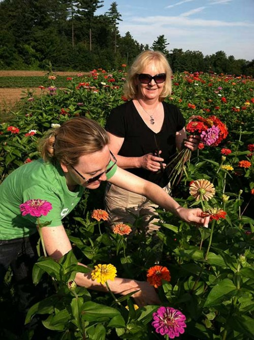 Pick Your Own Flowers at Parlee Farms