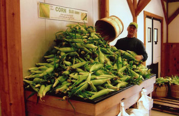 Fresh Picked Corn at Parlee Farms