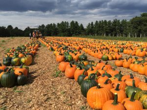 The Pumpkin Patch at Parlee Farms!
