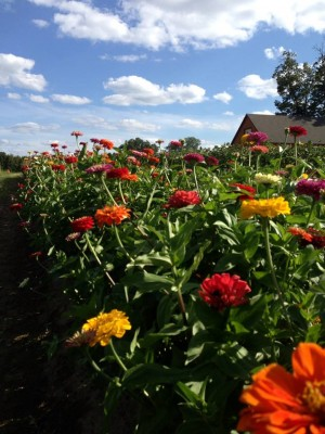 Pick Your Own Flowers at Parlee Farms!
