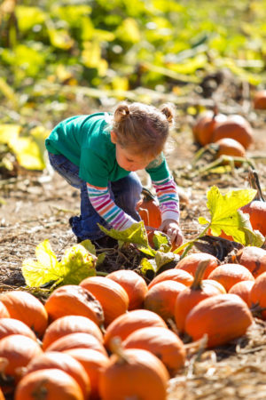 Parlee Farms Fall School Tours
