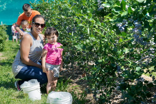 Blueberry Picking Farm Outside of Boston MA – Parlee Farms