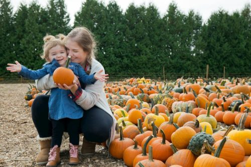 Over 40,000 Pumpkins grown at Parlee Farms!