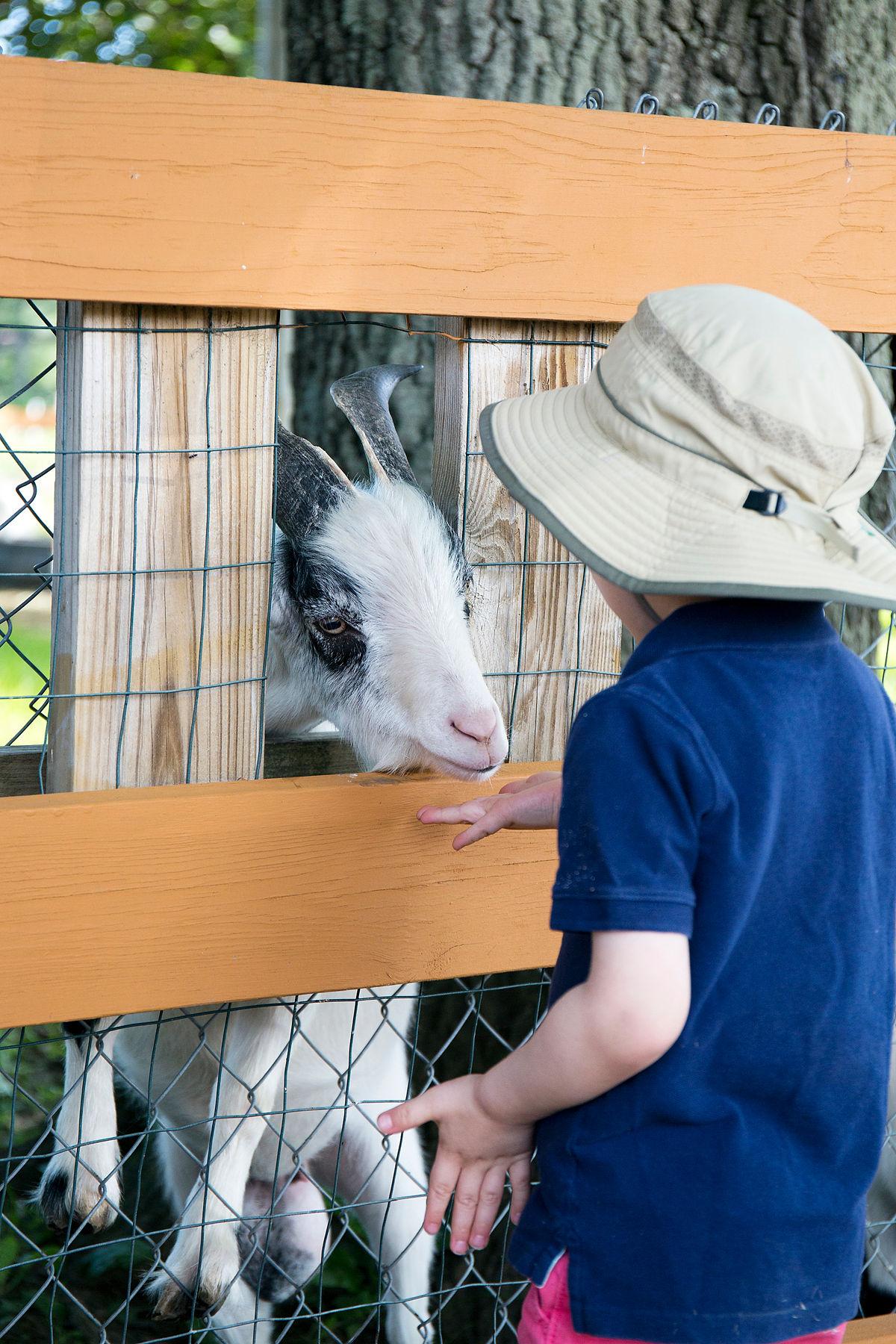 Lowell MA petting zoo