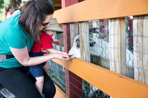 Lowell MA area animal petting farm