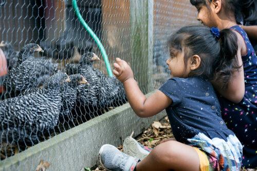 Petting Zoo at Parlee Farms