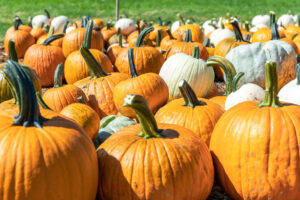 Pumpkin Patch at Parlee Farms